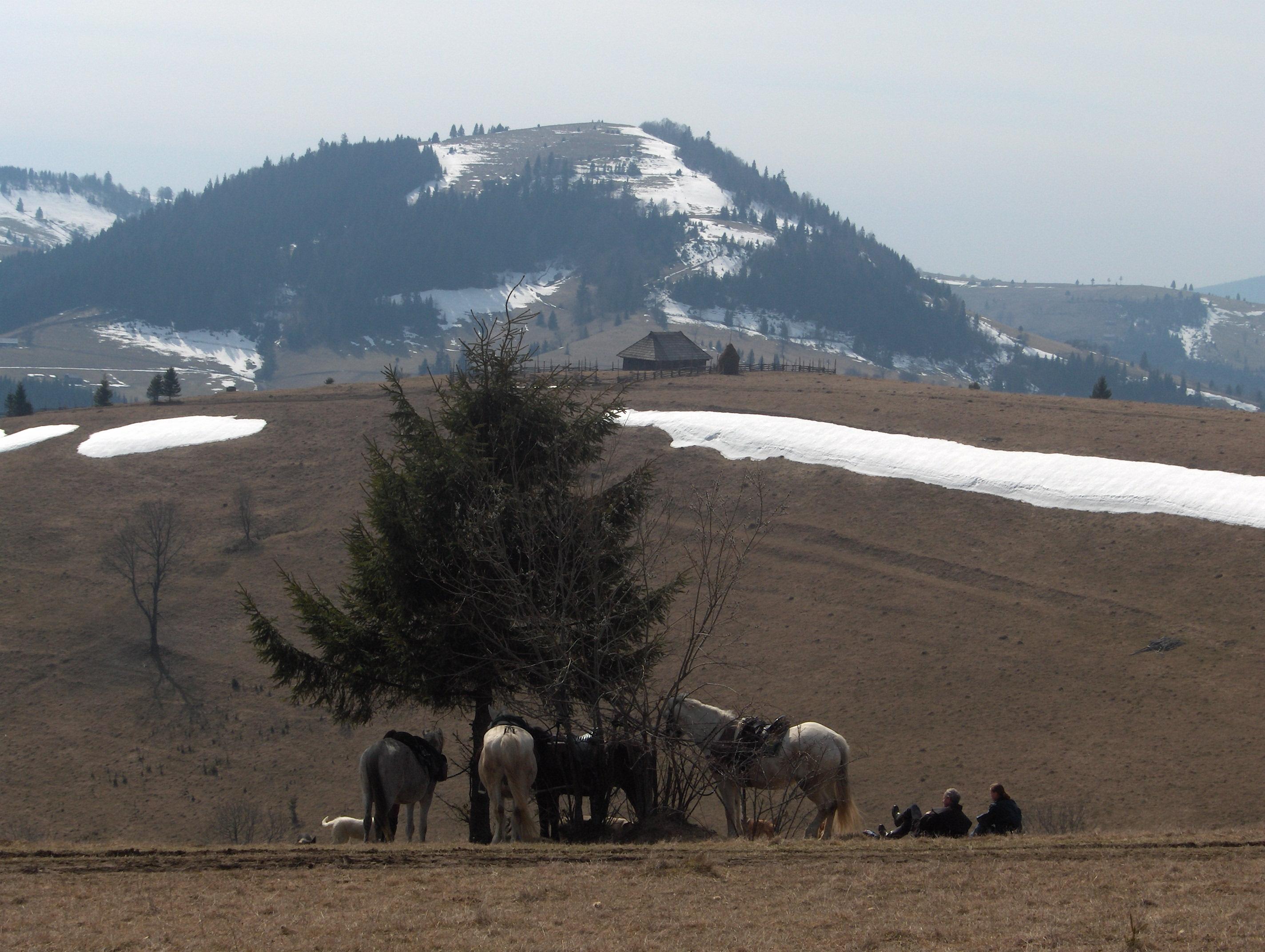 White Horse Pilgrim Trail Riding Gear